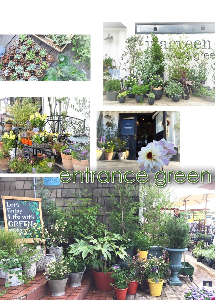 玄関に置いたグリーンは、室内と室外の境界を無くし流行の空間作りに役立ちます