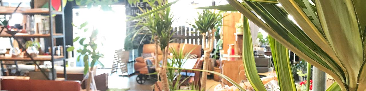 【BOOMS】個性派家具専門店ブームス 茨城~ 取手つくば~流行のおしゃれ家具&インテリア